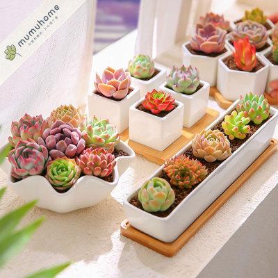创意多肉植物礼盒